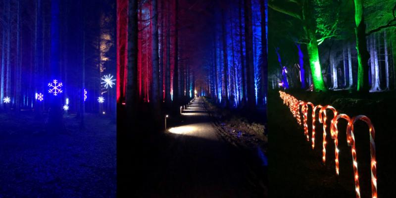 Beecraigs Festive Forest