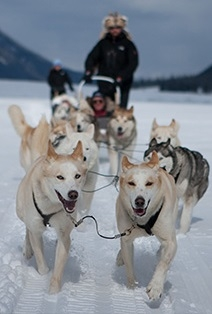 Husky Sledding Adventure